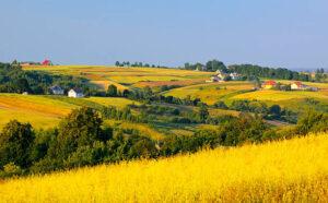 Малий бізнес в сільській місцевості для бідних
