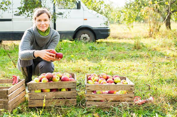 жінка продає яблука в селі