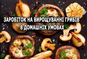Заробіток на вирощуванні грибів в домашніх умовах